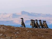 Дикая природа Перу: Битва за жизнь