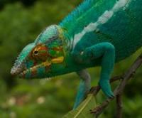 Фантастические существа Мадагаскара