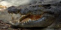 Самые опасные крокодилы мира