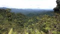 Borneo töölaager