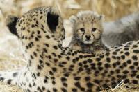 Dzīvnieku mazuļi