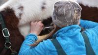 Доктор Окли: Ветеринар из Юкона